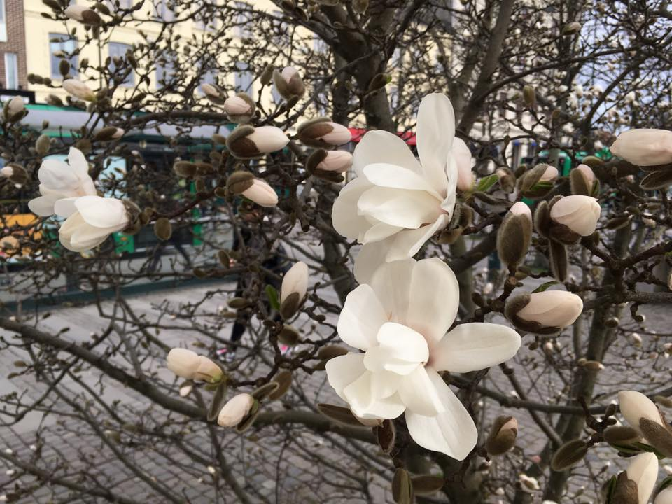 7 Flowers You Should Know to Believe that Swedish Spring isn't just a Myth  – Hayu Hamemayu