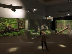 Exhibition about bird