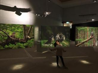 Exhibition about bird