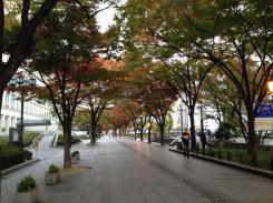 Musim gugur di Osaka