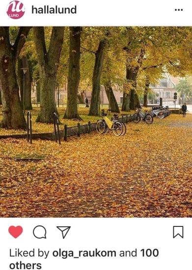 Foto saya dipilih sebagai foto terbaik minggu ini (25 Oktober 2017) oleh koran lokal di Lund